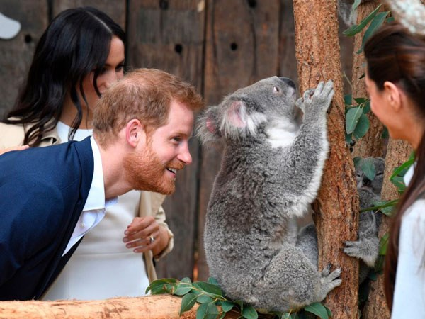 Prince Harry gets up close and personal with Aussie wildlife.