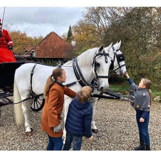 Taking the reins, the Danish Royals clearly love the majestic animals. *(Image: @detdanskekongehus Instagram)*