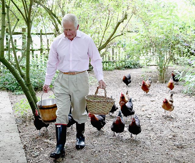 The royal grandfather is known for his flock of prize-winning chickens. *(Image: Getty -  Images are part of a set to mark His Royal Highness's 70th birthday.)*