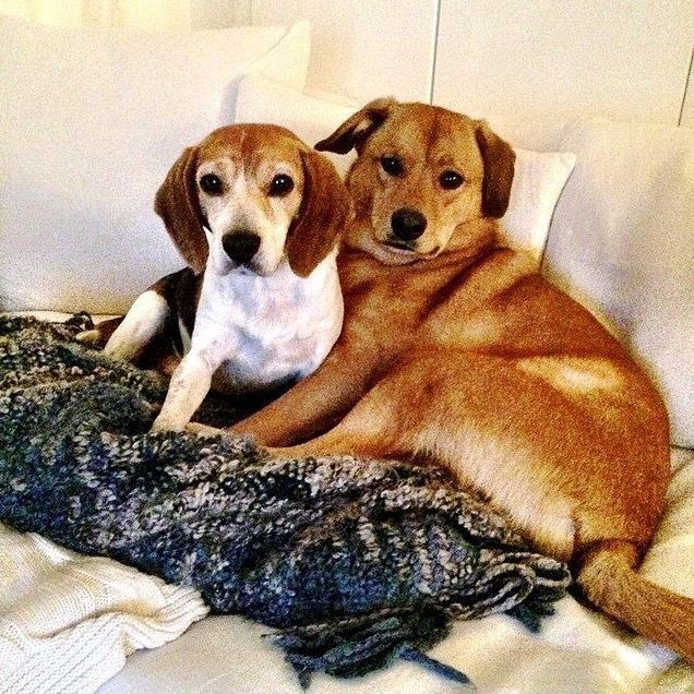 Could Guy and Bogart be the most photogenic dogs ever?