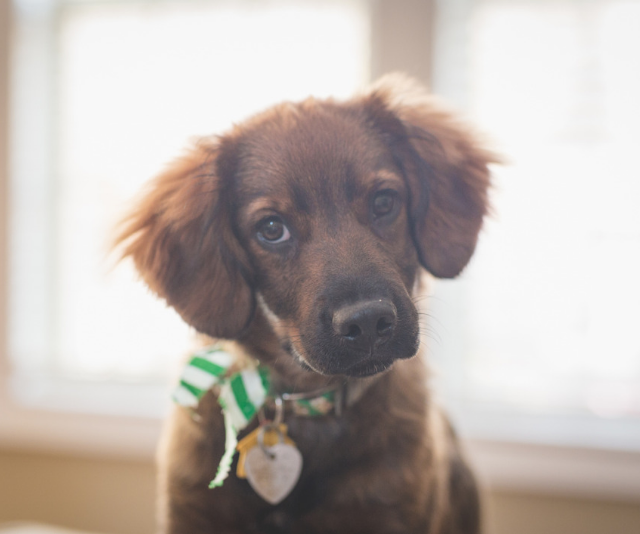 """**The Mixed Breed or Rescue Dog:** """"These come in all shapes, sizes and personalities. They may be a mix of breeds or purebred. They may be puppies or adults. They cost less than pedigrees but give just as much love."""" *Image: Getty Images.*"""