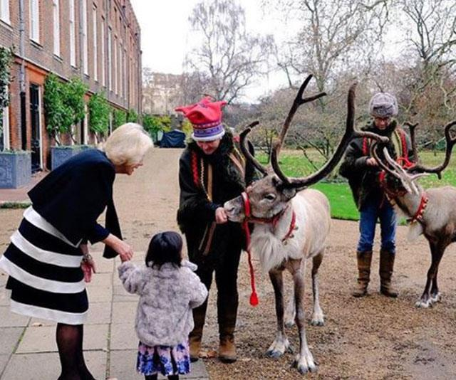 Duchess Camilla is another royal who loves sharing Christmas magic with the younger generation. *(Image: Getty)*