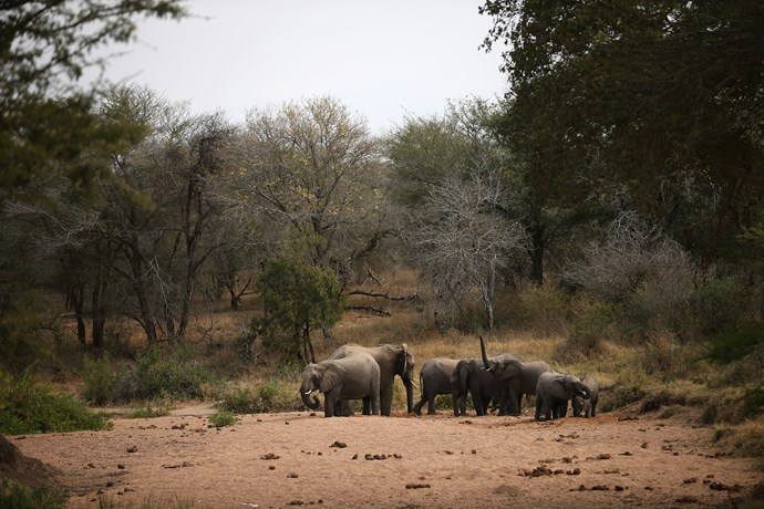 Some of the wildlife in Kruger National Park, South Africa. *(Image: Getty)*