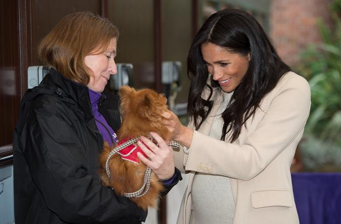 Duchess Meghan attended an engagement at a dog charity earlier in the day. *(Image: Getty)*