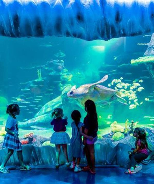 Go under the sea for an incredible marine experience at Sea Life Sydney.  *(Image: Facebook)*