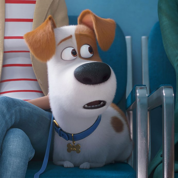 **The Secret Life of Pets 2** *(in cinemas June 20)* Max (Patton Oswalt) and his pet friends are back at it - that is, going on with their secret lives after their owners head off to work or school each day.    *(Image: Universal Pictures)*