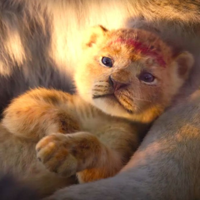 **The Lion King** *(in cinemas July 17)* A lion cub prince called Simba (Donald Glover) is born and his uncle Scar plots to ensure he does not one day become king. Simba, believing his death is his fault, flees the kingdom. With help from his new friends, Nala (Beyonce Knowles), Pumbaa (Seth Rogan) and Timon (Billy Eichner), Simba must grow up and figure out how to reclaim the throne.   *(Image: Disney)*