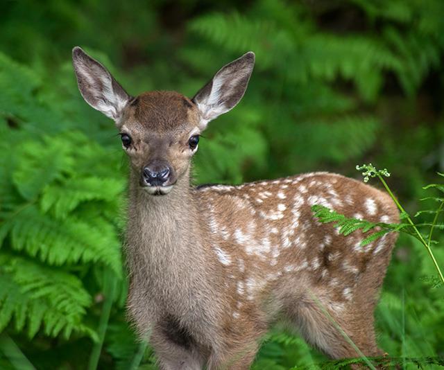 Deer milk is your skin's surprising new best friend. *(Image: Getty)*