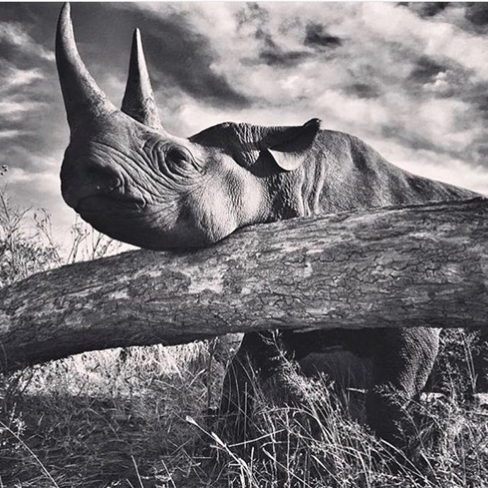 Africa's Unicorn, the rhino. *(Source: Instagram/@sussexroyal The Duke of Sussex©️DOS)*
