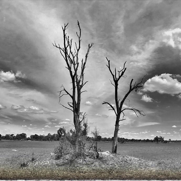 Botswana's Okavango Delta *(Source: Instagram/@sussexroyal The Duke of Sussex©️DOS)*