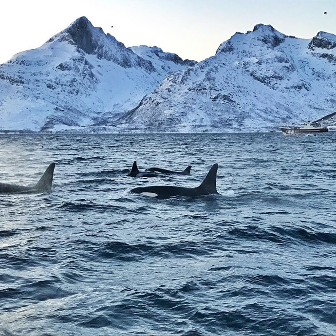 The orca whale. *(Source: Instagram/@sussexroyal The Duke of Sussex©️DOS)*