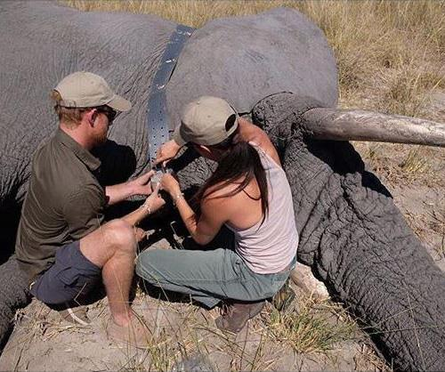 Harry and Meghan visiting Botswana in 2017, where they worked with Elephants Without Borders and equipped a bull elephant with a satellite collar. *(Image: @sussexroyal/Instagram)*