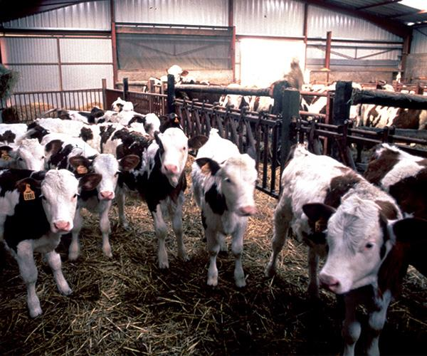 If you lived in the UK when mad cow disease was rife, you won't be able to give blood.