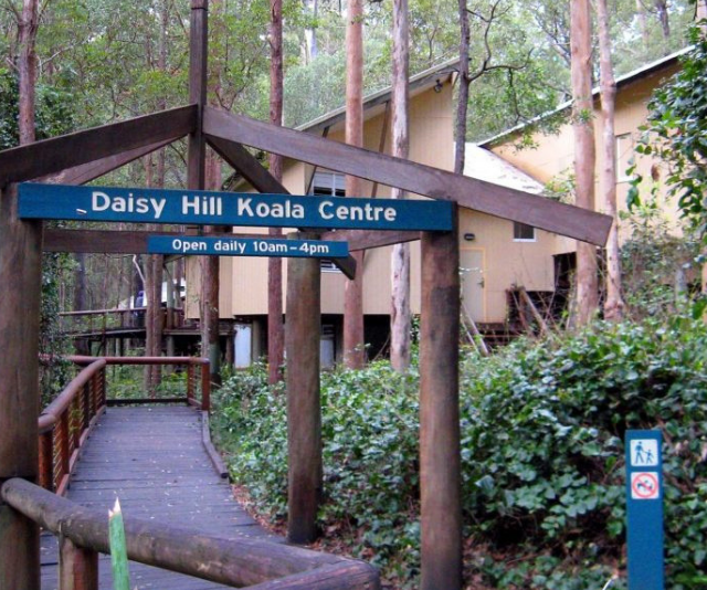 Learn all about koalas than the Daisy Hill Koala Reserve.