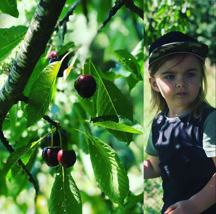 What a lucky kid! Axel also went cherry picking in Germany.