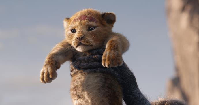 Baby Simba is presented at Pride Rock!