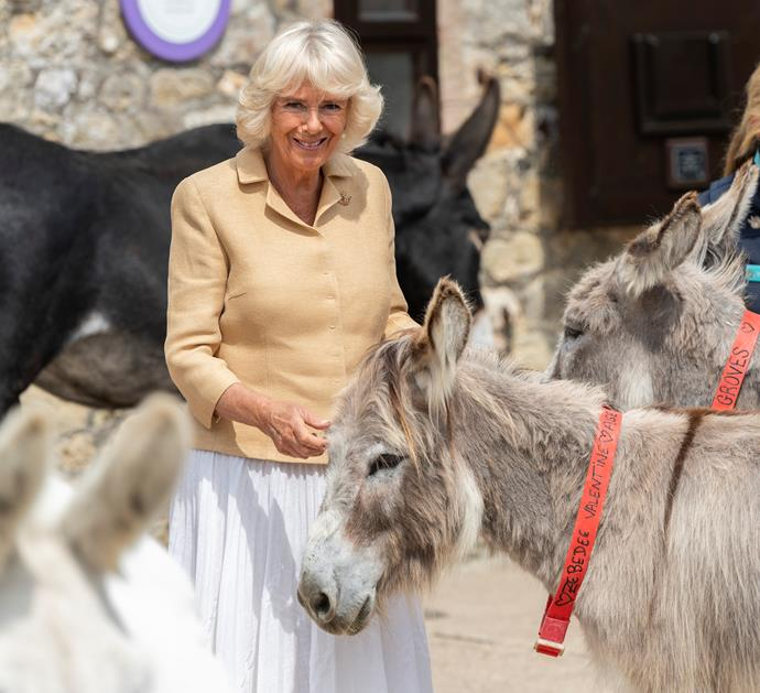 Duchess Camilla's birthday present from the Donkey Sanctuary was to name their new foal.