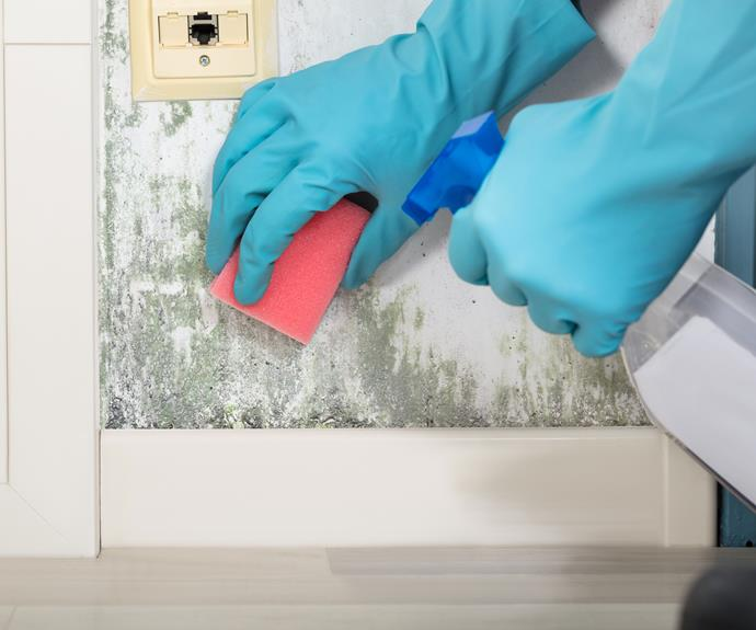 Regular cleaning can help control mould.
