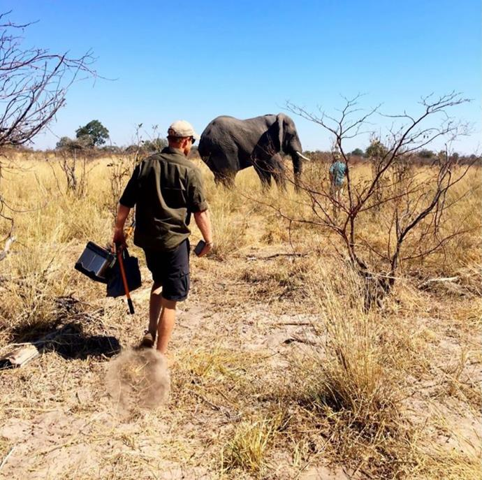 Prince Harry, with equipment in hand, on the way to an elephant.