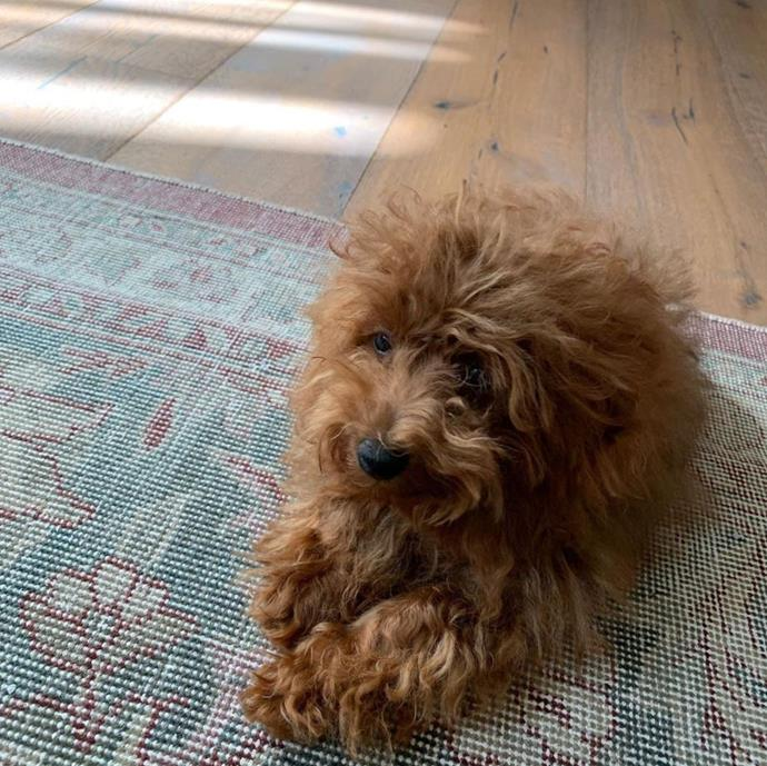 """The newest addition to our family... #adopted,"" Lara Worthington proudly captioned this snap of her new family member. So fluffy!"