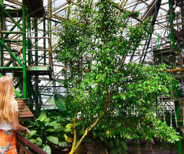 **Cairns Zoom and Wildlife Dome:** Got an adventurer in your midst? Cairns ZOOM and Wildlife Dome is the world's first challenge ropes course in a wildlife park! Situated right in the heart of the Cairns CBD, there's something for every member of the family, no matter their level of adventure seeking. You could cuddle a koala, enjoy interactive Australian wildlife presentations or get real brave and try one of the three graded ziplines – one of which takes participants directly over Goliath, a four-metre saltwater crocodile!