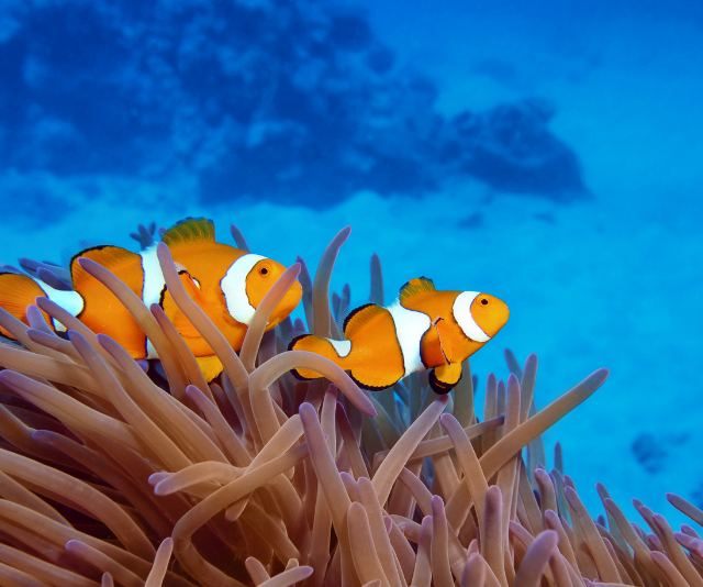 Your kids really can 'Find Nemo' on a Cairns adventure.