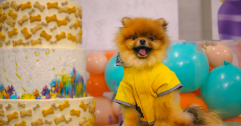 Anna Polyviou just made Australia's largest cake for dogs | Bounty