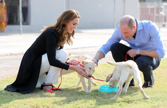 Kate and William were visiting Islamabad's Army Canine Centre, which helps to breed and train dogs to identify explosives. The scenes were frankly adorable as the two royals played with the joyful puppers!