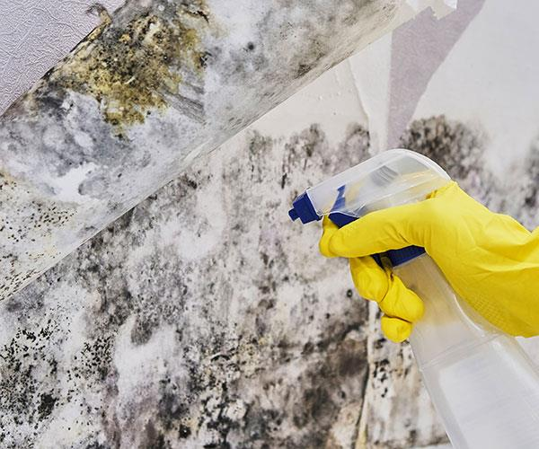 Get rid of any lurking mould in your home.