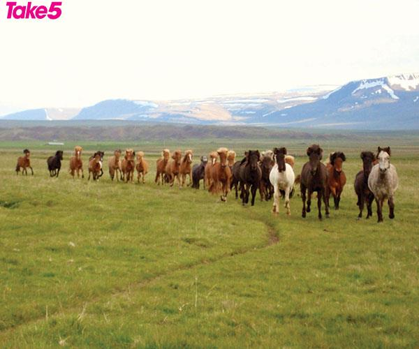 Maybe it was time to explore a new country and ride the horses of Iceland?