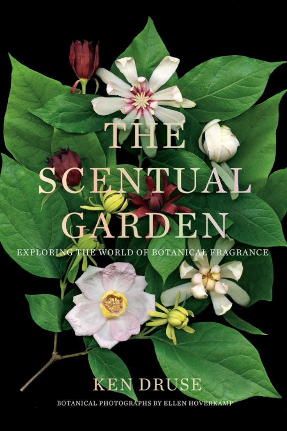 ***The Scentual Garden* by Ken Druse** <br><br> Growing for fragrance is at the heart of this visually vivid encyclopaedia of plants.Working with perfumers' classifications, Ken Druse has 12 categories, from floral and fruity to balsamic and medicinal. He also explains how plants produce scent and how they communicate with each other.
