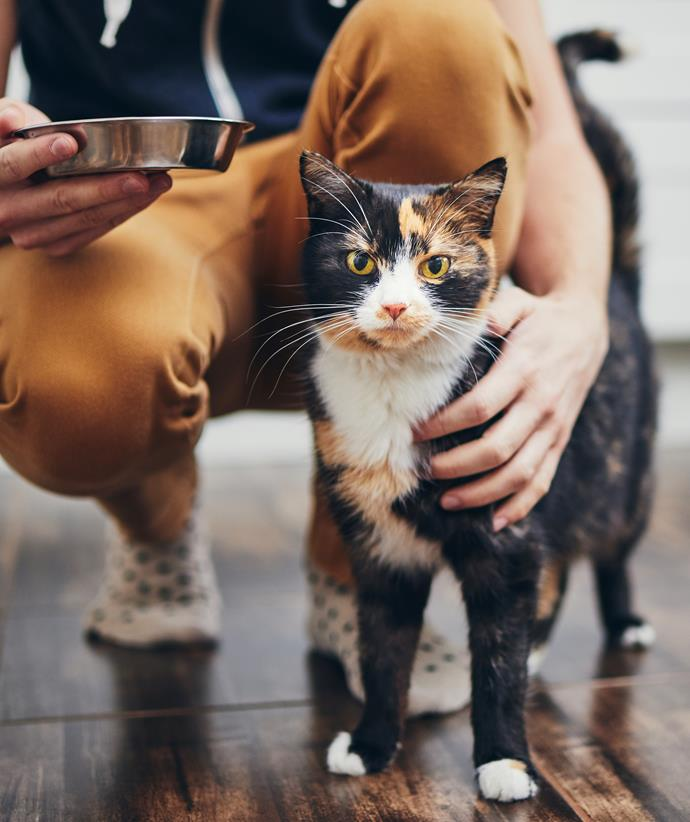 "Cats can't be vegetarian!""There are many people who'd like their cats to follow their lifestyle, but cats are carnivores so they need to eat meat,"" says Kate. Meat-free diets put your cat's health at risk."