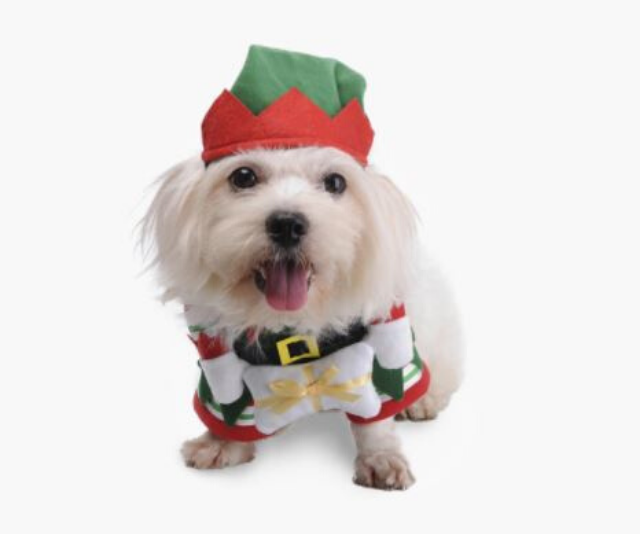 "**Christmas Elf Dog Costume** <br><br> **[$24.95 from Pet Threads](https://petthreads.com.au/shop/dog-costumes/novelty/christmas-elf-dog-costume/|target=""_blank""