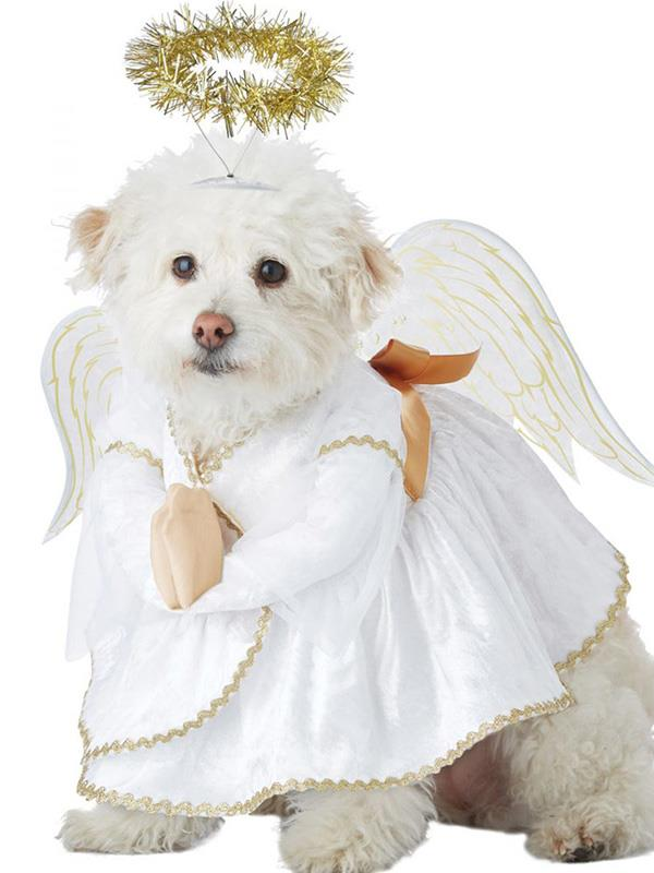 "**Heavenly Pound Pet Costume** <br><br> **[$40 from Costume Box](https://www.costumebox.com.au/heavenly-hound-pet-costume.html|target=""_blank""
