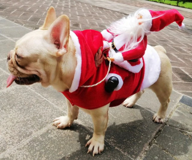 "**Ride Em Santa Dog Costume** <br><br> **[$24.95 from Pet Threads](https://petthreads.com.au/shop/dog-costumes/christmas/ride-em-santa-dog-costume/|target=""_blank""