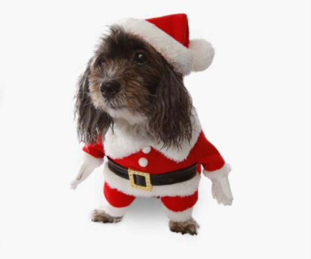 "**Santa Claus dog costume** <br><br> **[$24.95 from Pet Threads](https://petthreads.com.au/shop/dog-costumes/christmas/santa-claus-dog-costume/|target=""_blank""