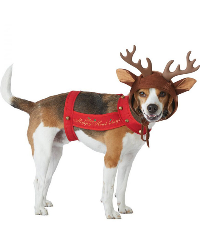 "**Reindog Dog Pet Costume** <br><br> **[$30 from Costume Box](https://www.costumebox.com.au/reindeer-dog-and-pet-costume.html|target=""_blank""