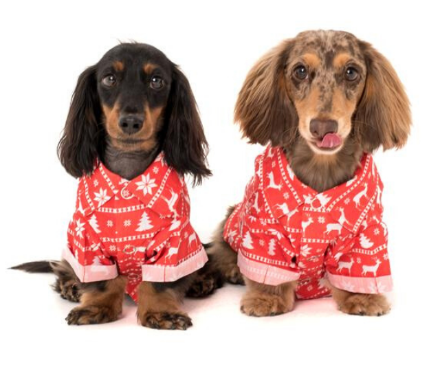 "**The Ugly Christmas Sweater BBQ Dog Tee** <br><br> The dog t-shirts are sold separately to the human versions.  <br><br> **[$42.95 from Pablo & Co](https://pabloandco.net/collections/clothing/products/the-ugly-christmas-sweater-bbq-dog-tee|target=""_blank""