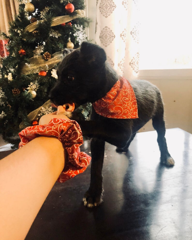 "**Dog bandana and matching scrunchie** <br><br> **[$11 from Etsy](https://www.etsy.com/au/listing/740881620/dog-bandana-christmas-accessories-for?ga_order=most_relevant&ga_search_type=all&ga_view_type=gallery&ga_search_query=matching+pet+owner+christmas&ref=sr_gallery-2-10&organic_search_click=1&cns=1|target=""_blank""