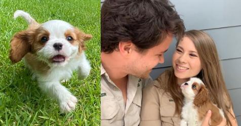 Bindi Irwin and Chandler Powell's adorable new puppy | Australian Women's Weekly