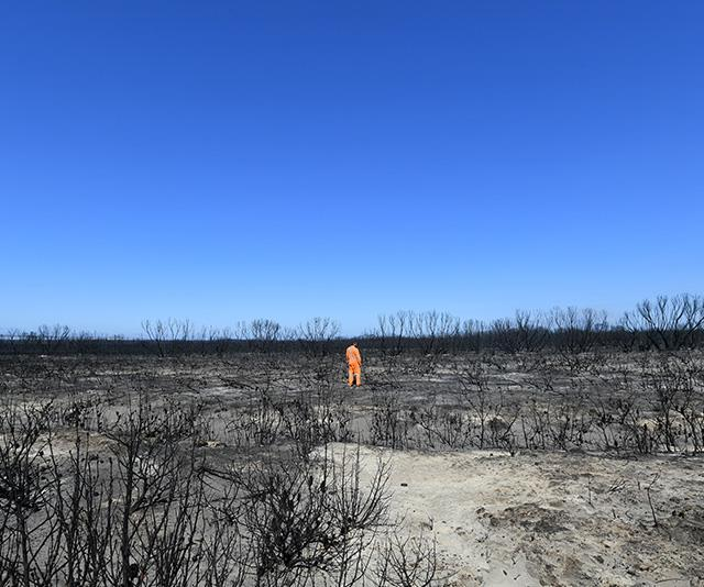 A firefighter surveys the damage on Kangaroo Island.