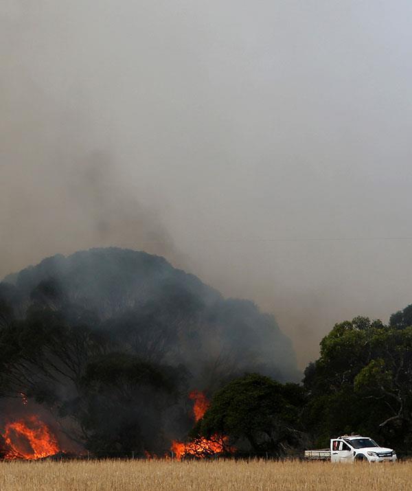 The devastating Kangaroo Island fires destroyed 210,000 hectares of land.