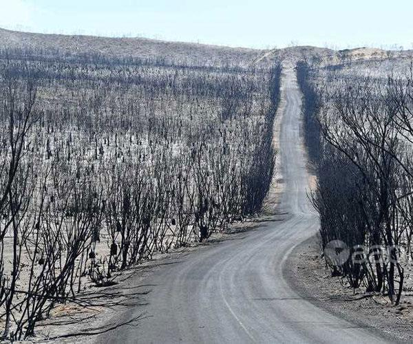 The fire obliterated the bush land at Flinders Chase National Park.