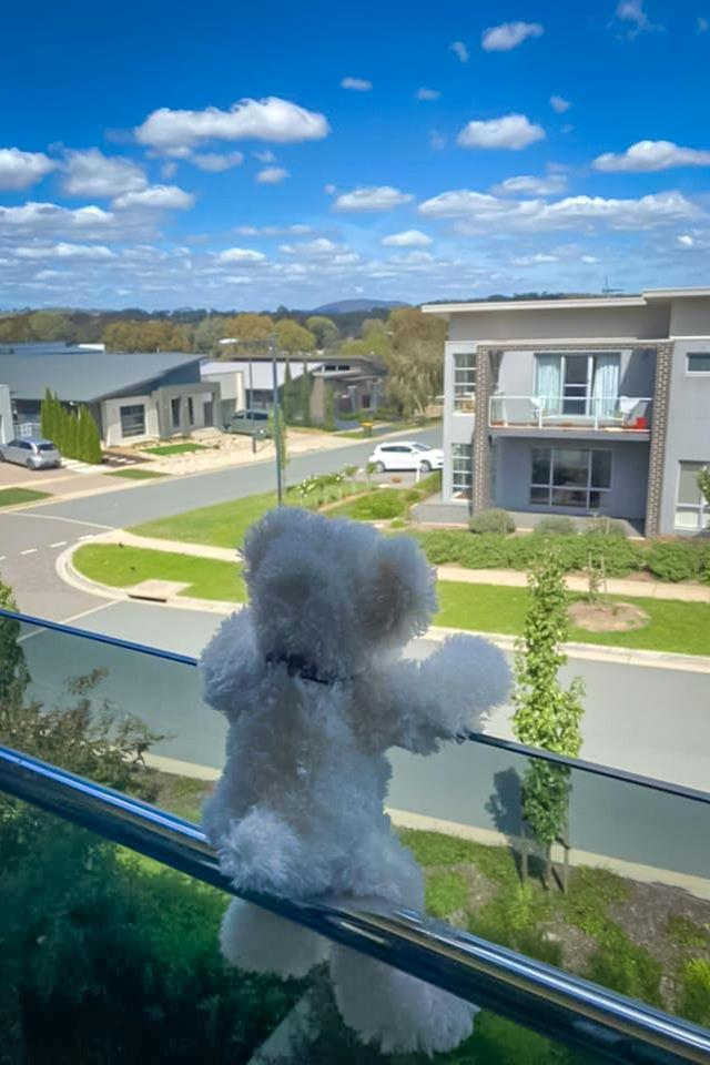 Canberra residents have been placing their teddy bears in their windows and on balconies for local kids to spot.  <br><br> The initiative is inspired by the book *Going On A Bear Hunt* by Michael Rosen and Helen Oxenbury, and is gaining popularity.  <br><br> Parents and kids who are staying home can enjoy a short walk through the neighbourhoods to keep active, and spot as many bears as they can, while still keeping physical distance from others.