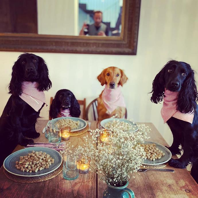 "As we cannot enjoy going out to a fancy restaurant for dinner at the moment, many couples and families are getting creative with recreating that ambience at home. <br><br> One of our favourite was from the Duchess of Cambridge''s brother, James Middleton. He posted this hilarious photo of his self-isolation dinner party with his four perfect pooches on [his Instagram](https://www.instagram.com/p/B94sTQUA7uM/|target=""_blank""), complete with neck napkins, flowers and candles! <br><br> It also serves as an important reminder that although you may be stuck at home, there's still plenty you can do to spice up the day."