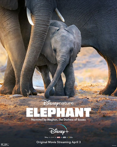 Disney's *Elephant* will be available for streaming on Disney+ on April 3.