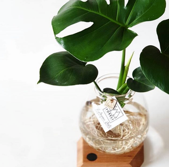 "Victoria-based Torquay Merchant offers plenty of trinkets perfect for mum with a range of local creatives delivering the goods. Their beautiful selection of plants are next to none as well. Priced from around $85 and offering safe delivery to your door, [order one online here](https://www.torquaymerchant.com.au/product-category/plants/|target=""_blank""