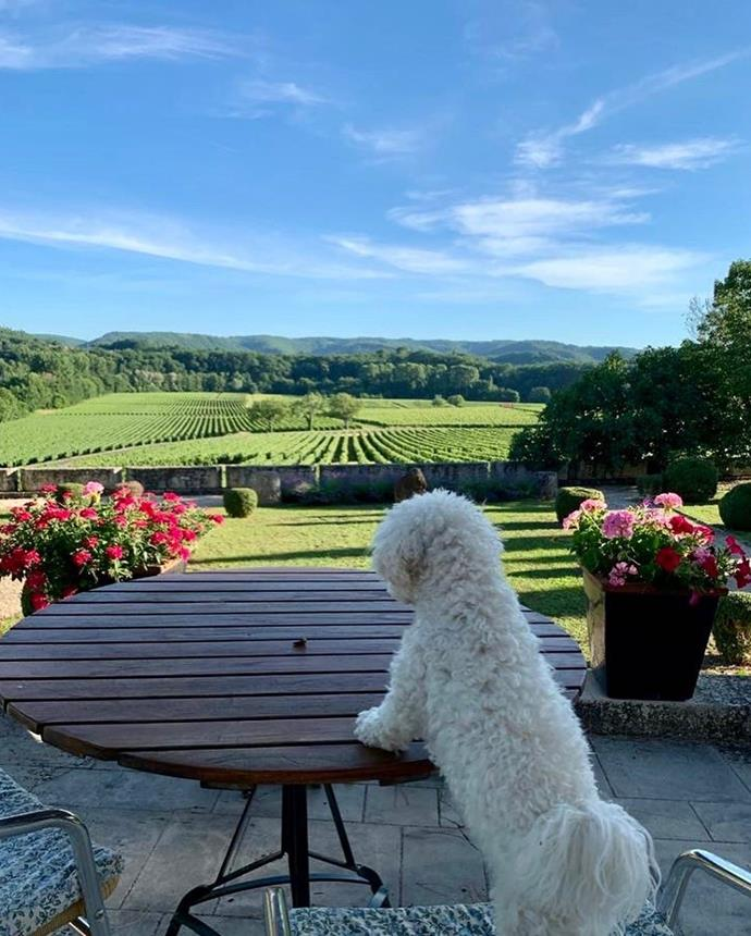 The family dog looks out onto the sprawling luxury French estate.