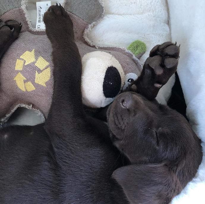 Mali having a nap with her favourite toy.