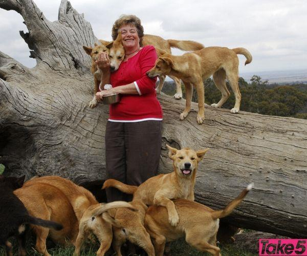 Me with the dingoes.